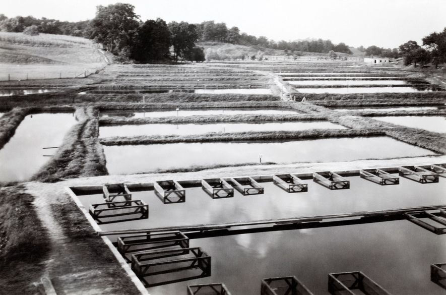 Grassyfork Fisheries, pictured here, is believed to be the first goldfish hatchery in the U.S., established ...