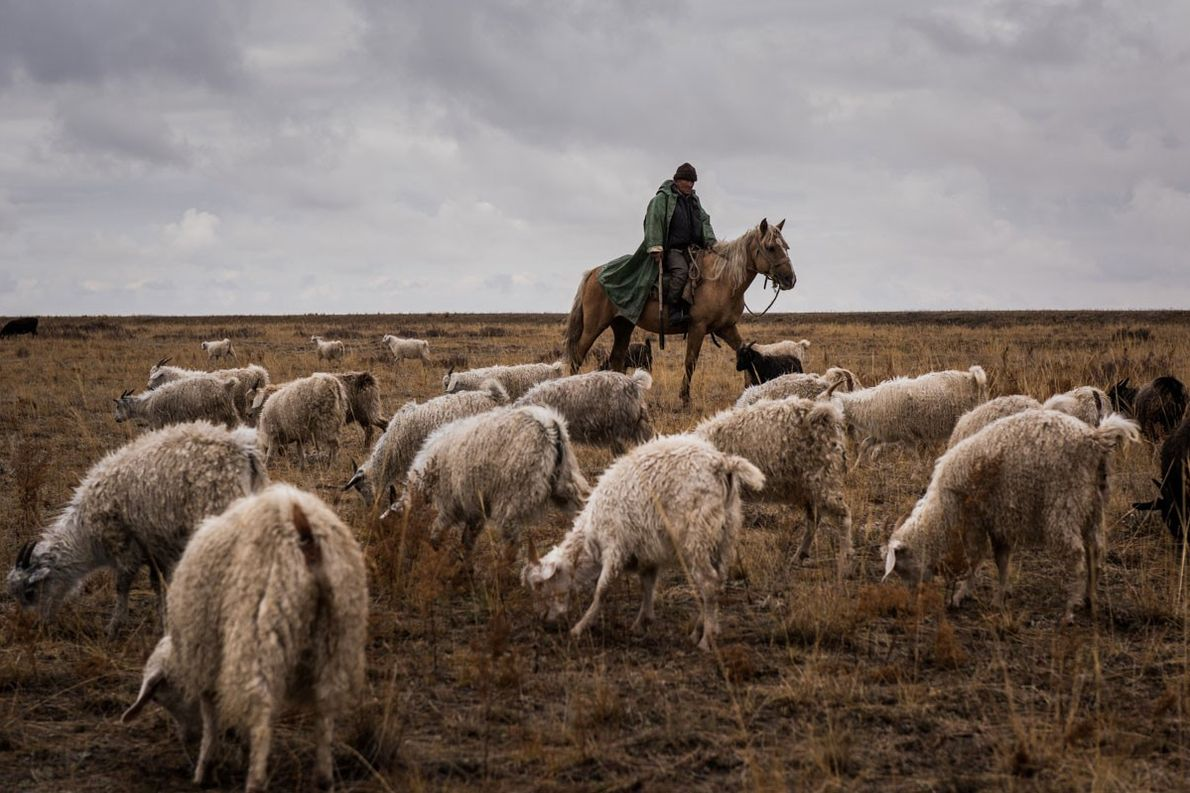 Kazbek Kasimov, 60, herds sheep and goats at the Semipalatinsk Test Site, south of Kurchatov in ...