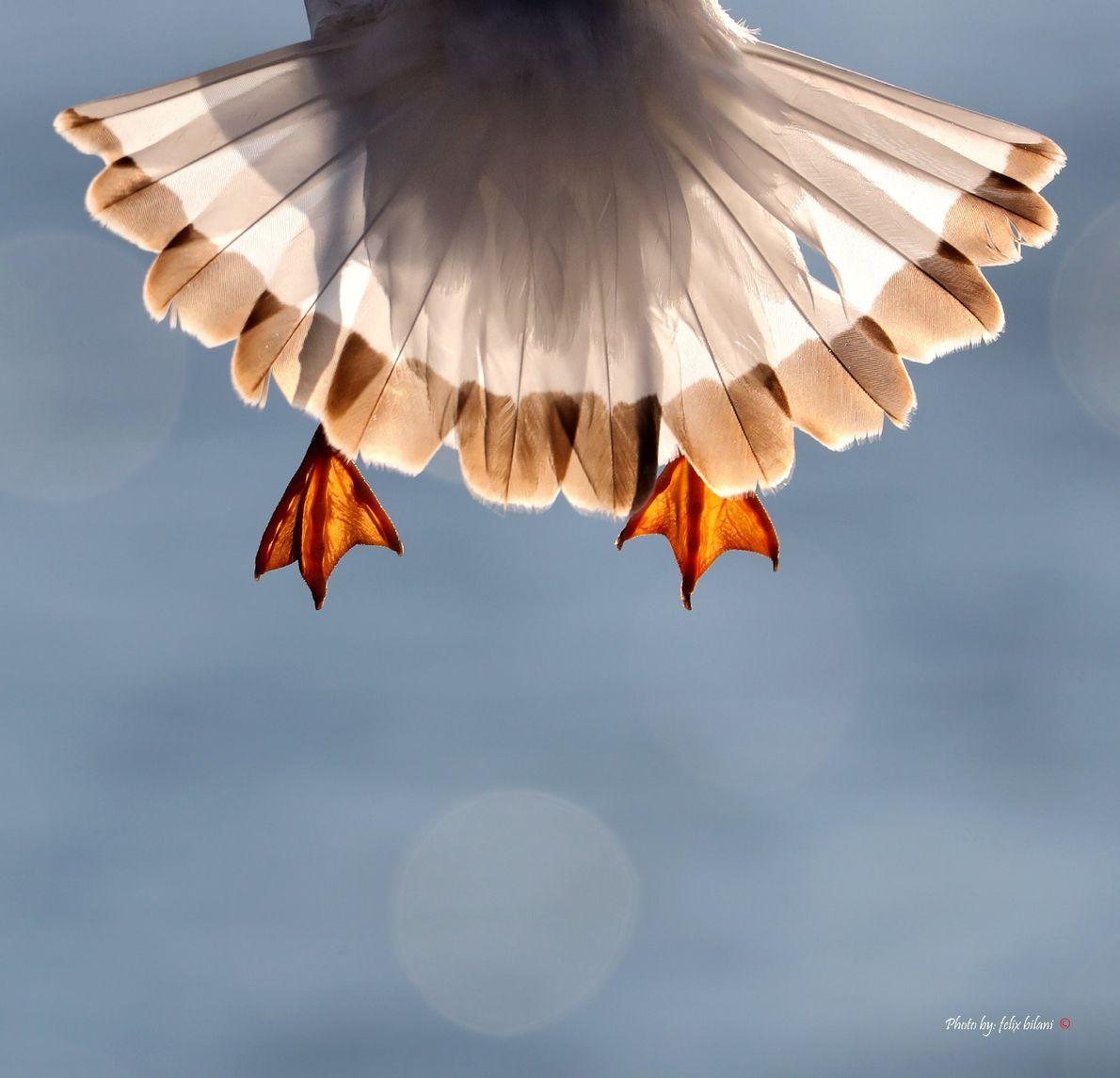 Your Shot photographer Felix Bilani captured this unique view of a bird as it takes flight.