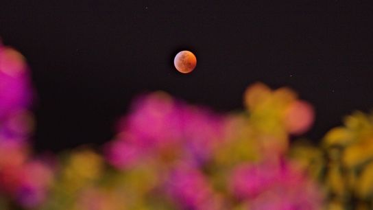 Your Shot photographer Fabrice Daniel Leroux made this image of the super blood wolf moon on ...