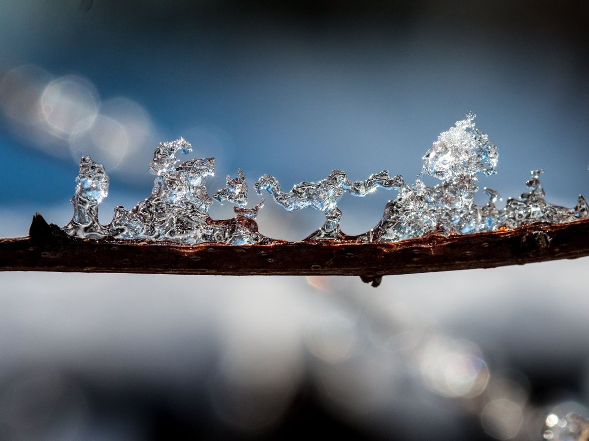 """""""The branches were all decorated with ice this morning after yesterday evening's snow storm,"""" writes Your ..."""