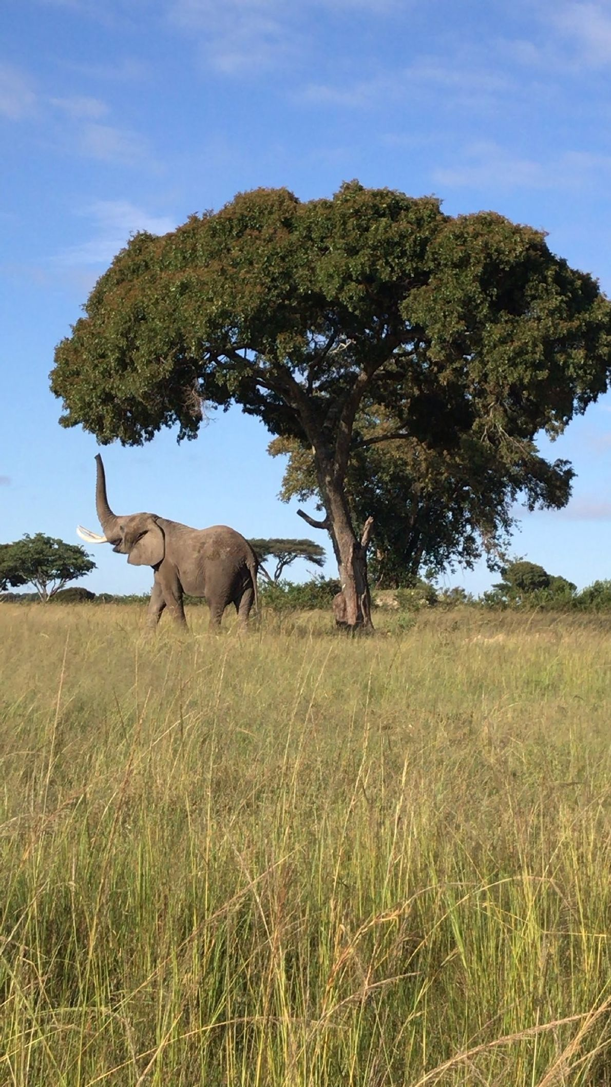 Your Shot photographer Chelsea T. made this mobile image while on an elephant walk in Imire ...