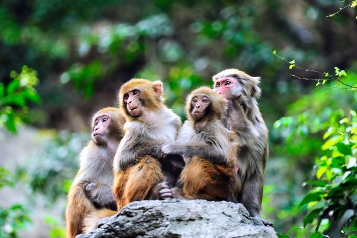 People's Choice in Responsible Tourism 2015 Winner: World Animal Protection.