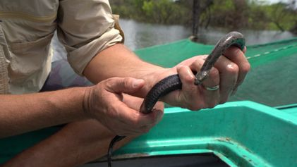 Why Snakes are Disappearing From Southeast Asia's Largest Lake.