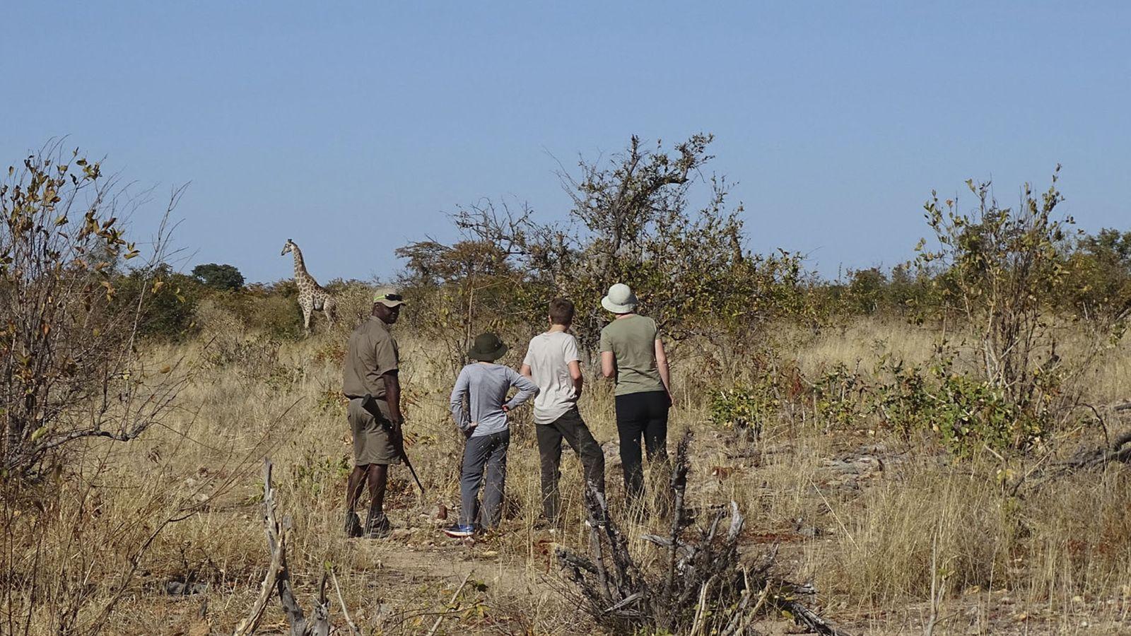 African Safari Walks