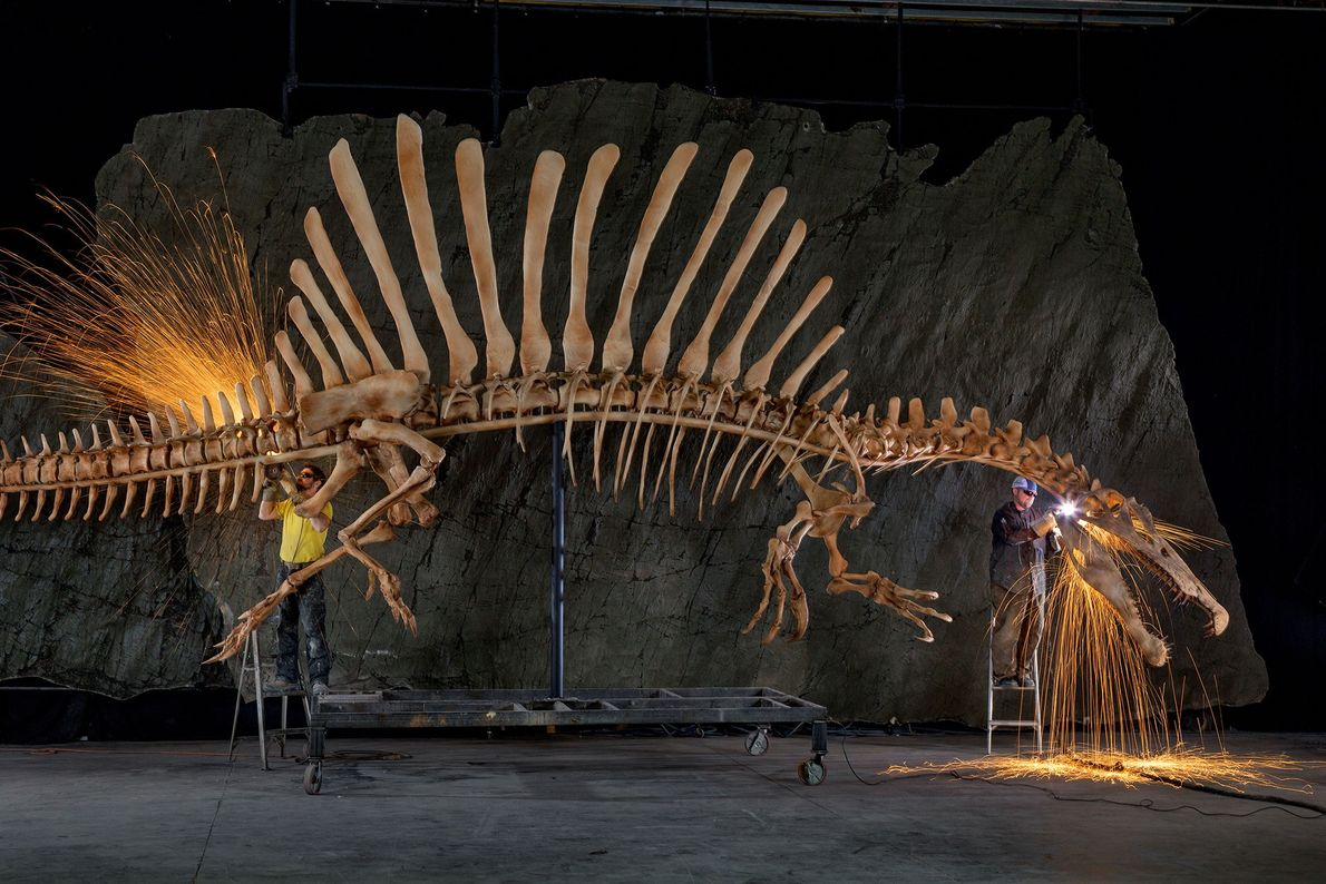 Exhibition workers put the finishing touches on an anatomically precise, life-size reconstruction of a 'Spinosaurus aegypticus' ...