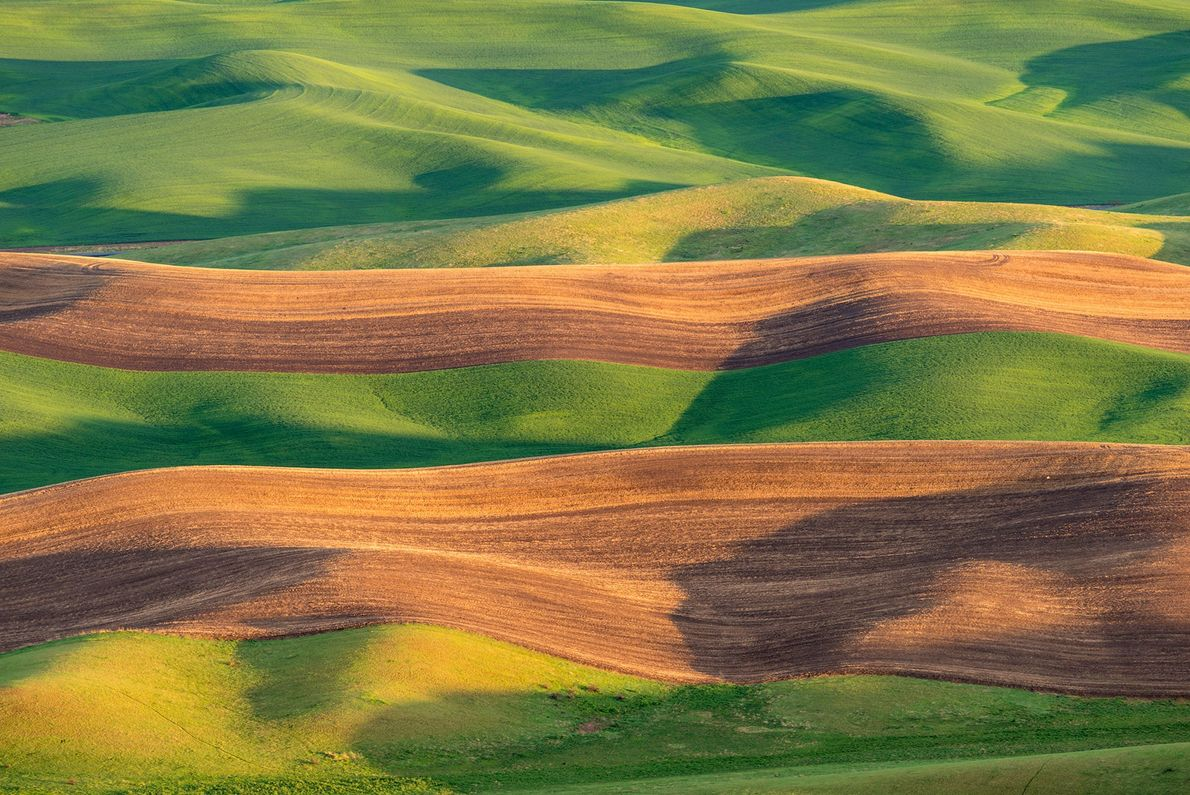 Rich soil called Palouse loess covers the rolling fields of eastern Washington in the western U.S.