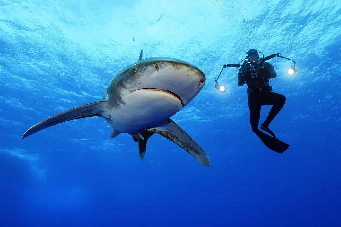 Oceanic whitetips are considered the fourth most dangerous sharks for people.