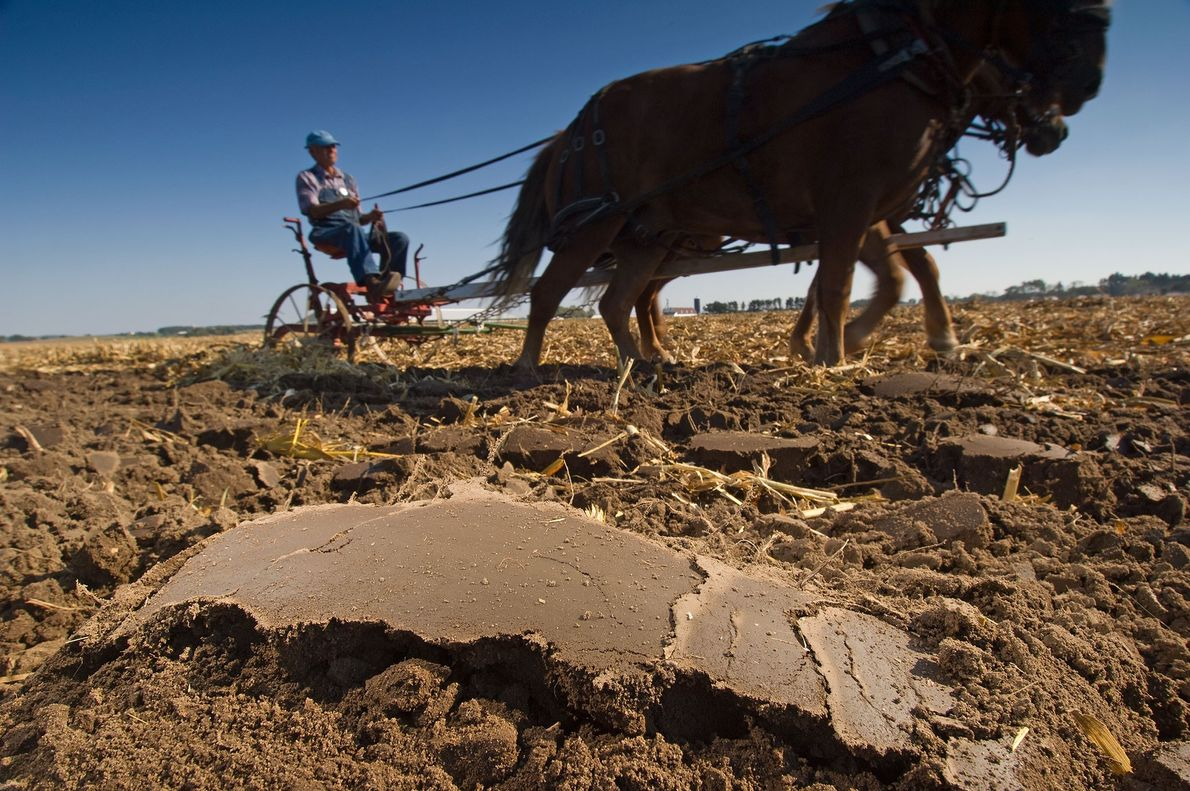 Spencer Yeoman, a farmer from Davis, Illinois, demonstrates horse ploughing at a farm technology conference in ...