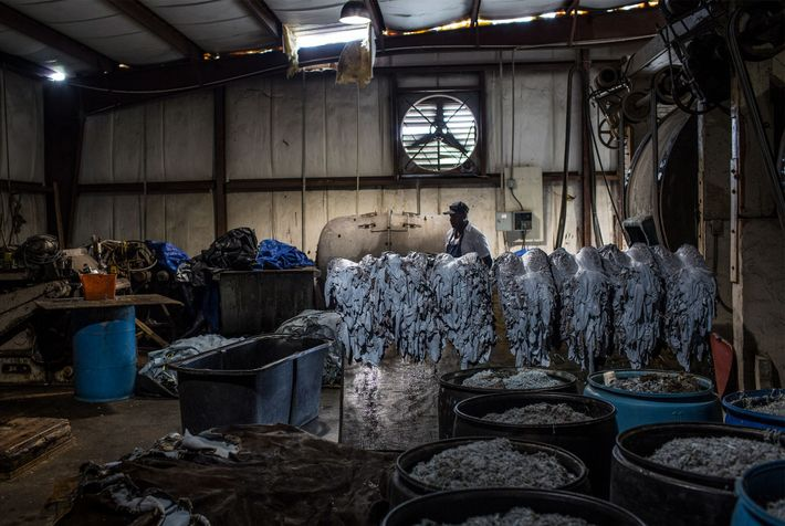 At Sebring Custom Tanning, workers treat alligator skins with lime, creating a greenish-white hue and a ...