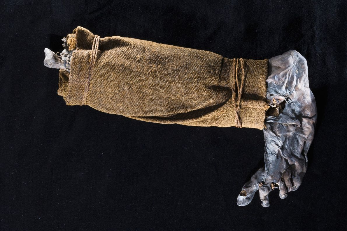 The leg of a bog body found in 1944. Parts of bog bodies, preserved for thouands ...
