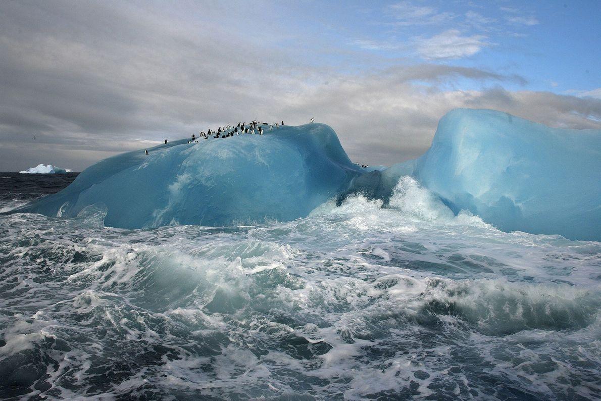 Chinstrap penguins rest atop a blue iceberg near Candlemas Island, Antarctica.