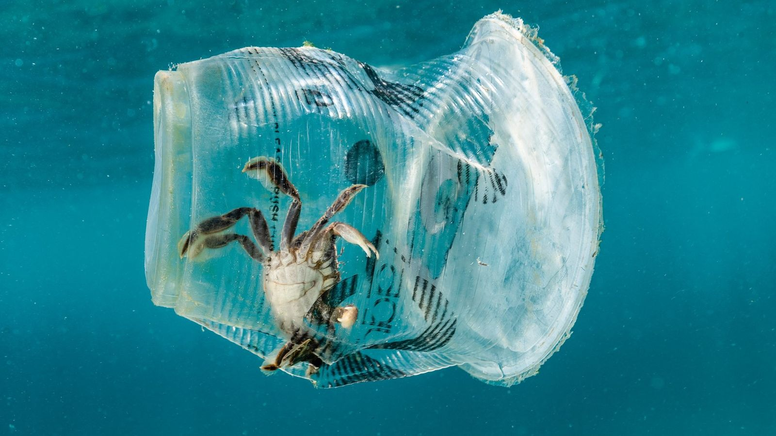Your Shot photographer Noel Guevara photographed this crab in a plastic cup floating near Maricaban Island, ...