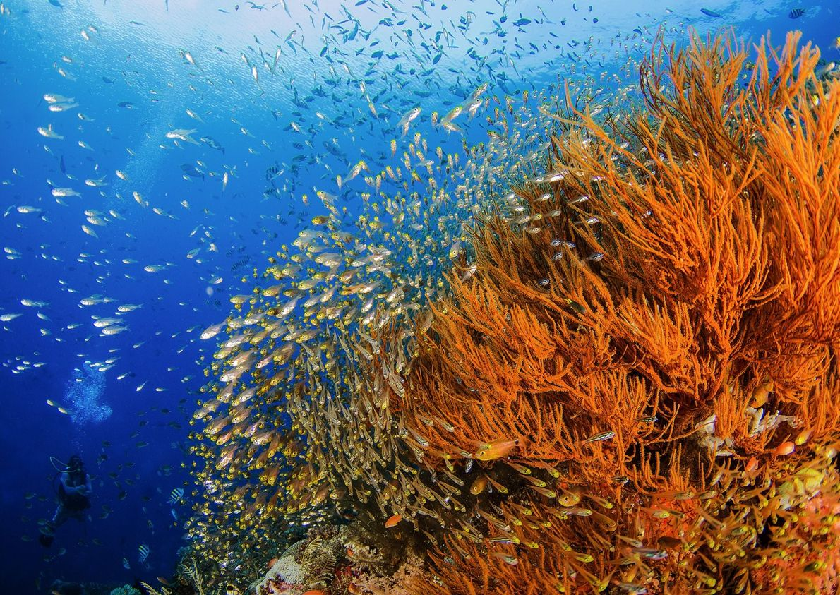 Your Shot photographer Natalie Bondarenko photographed this coral reef while glass fish swam in the waters ...