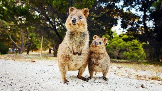 Close encounters with Western Australia's wildlife
