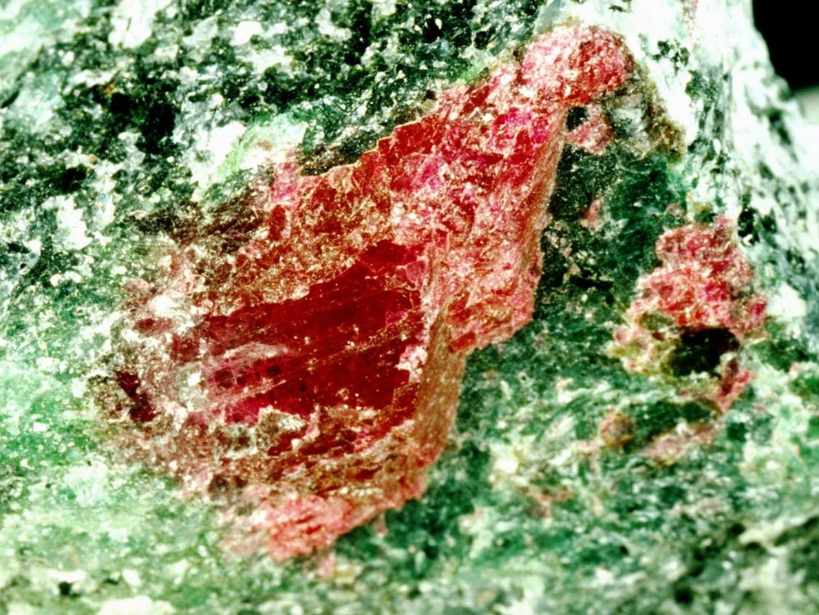 Its green surroundings showcase a ruby from Tanzania in its unpolished beauty. Rubies, valued as precious ...