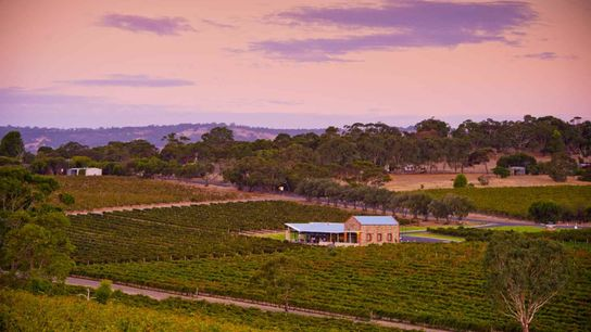 Angove Family Winemakers is Australia's largest organic grape grower and winemaker, and uses traditional methods and techniques ...
