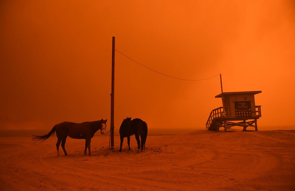 Horses are tied to a pole on the beach in Malibu as the Woolsey Fire comes ...