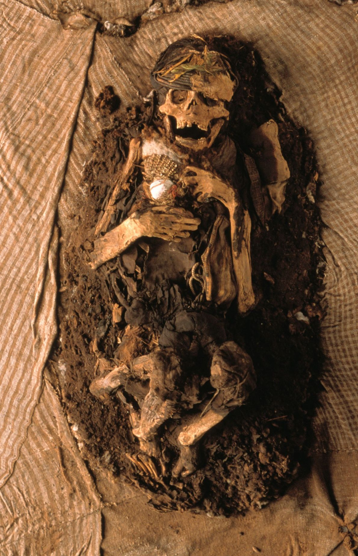 An unwrapped Inca mummy in Lima, Peru. Men, women, and children would be wrapped in yards ...