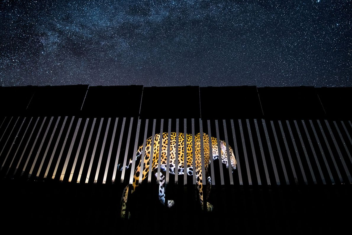 Mexican photojournalist Alejandro Prieto won the wildlife photojournalism category for best single image. He documented this ...