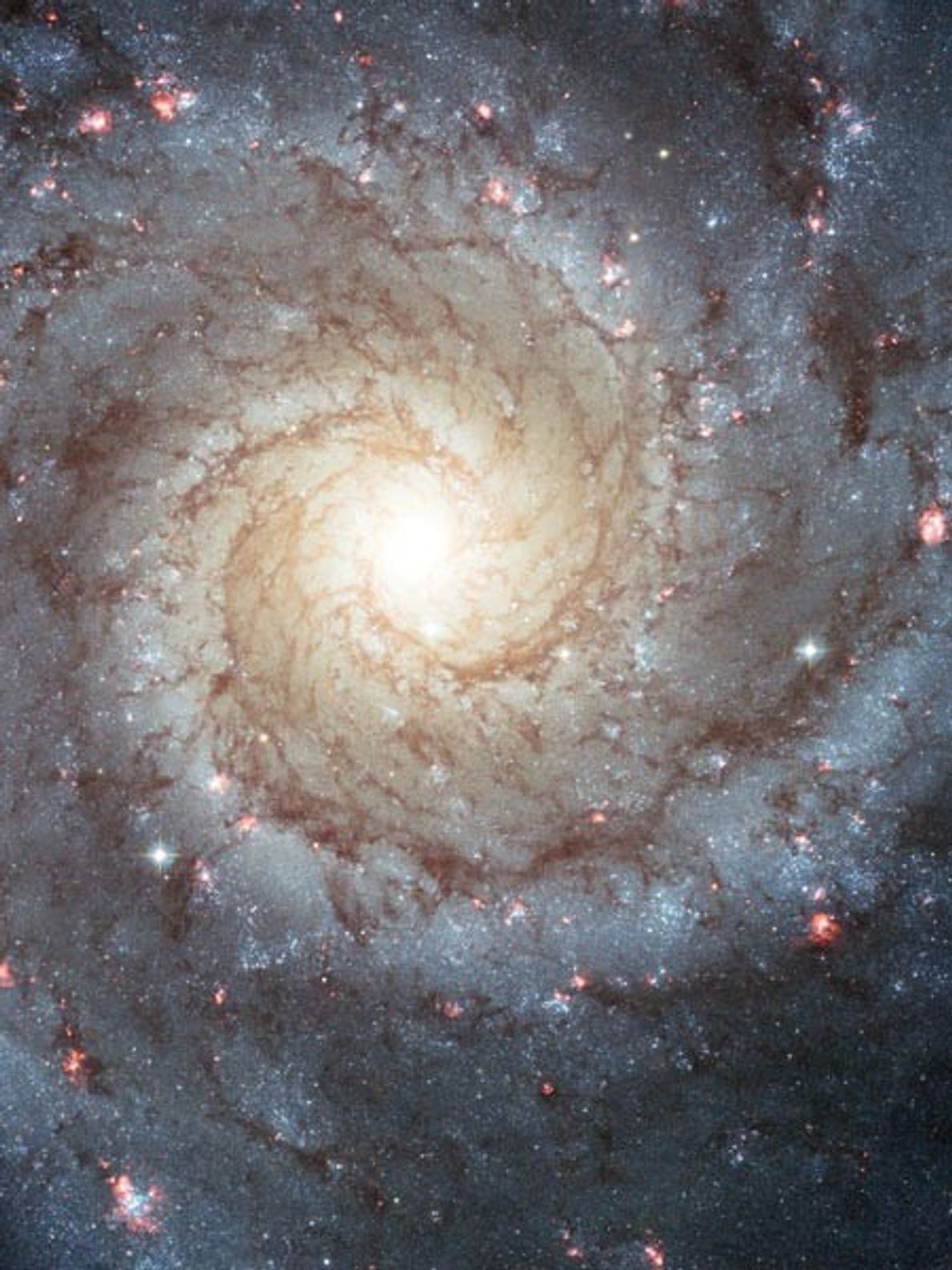 This image of the Whirlpool galaxy shows the classic features of a spiral galaxy: curving outer ...