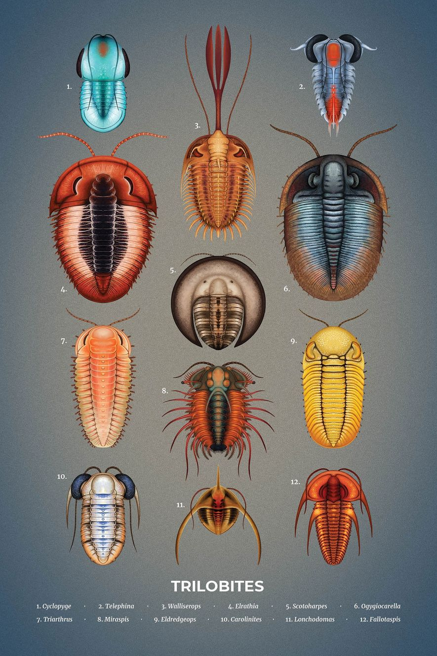 """Trilobites emerged during the Cambrian period some 520 million years ago and proliferated globally until their demise at the close of the Permian period 250 million years ago. """"Dangers lurked from every direction in the prehistoric seas. The need for self-defence spawned a menagerie of quirky creatures,"""" says Indonesia-based artist Franz Anthony. """"Though often depicted in black and brown, these creatures likely came in every imaginable colour, like today's crustaceans."""""""