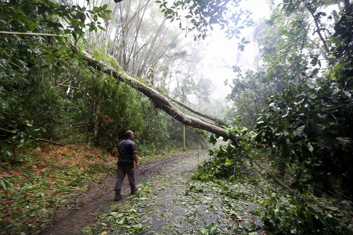A man examines destruction on a rural road in Cañaboncito, Puerto Rico on September 7.
