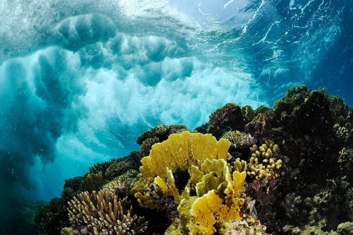 Waves wash over a coral reef in the Red Sea.