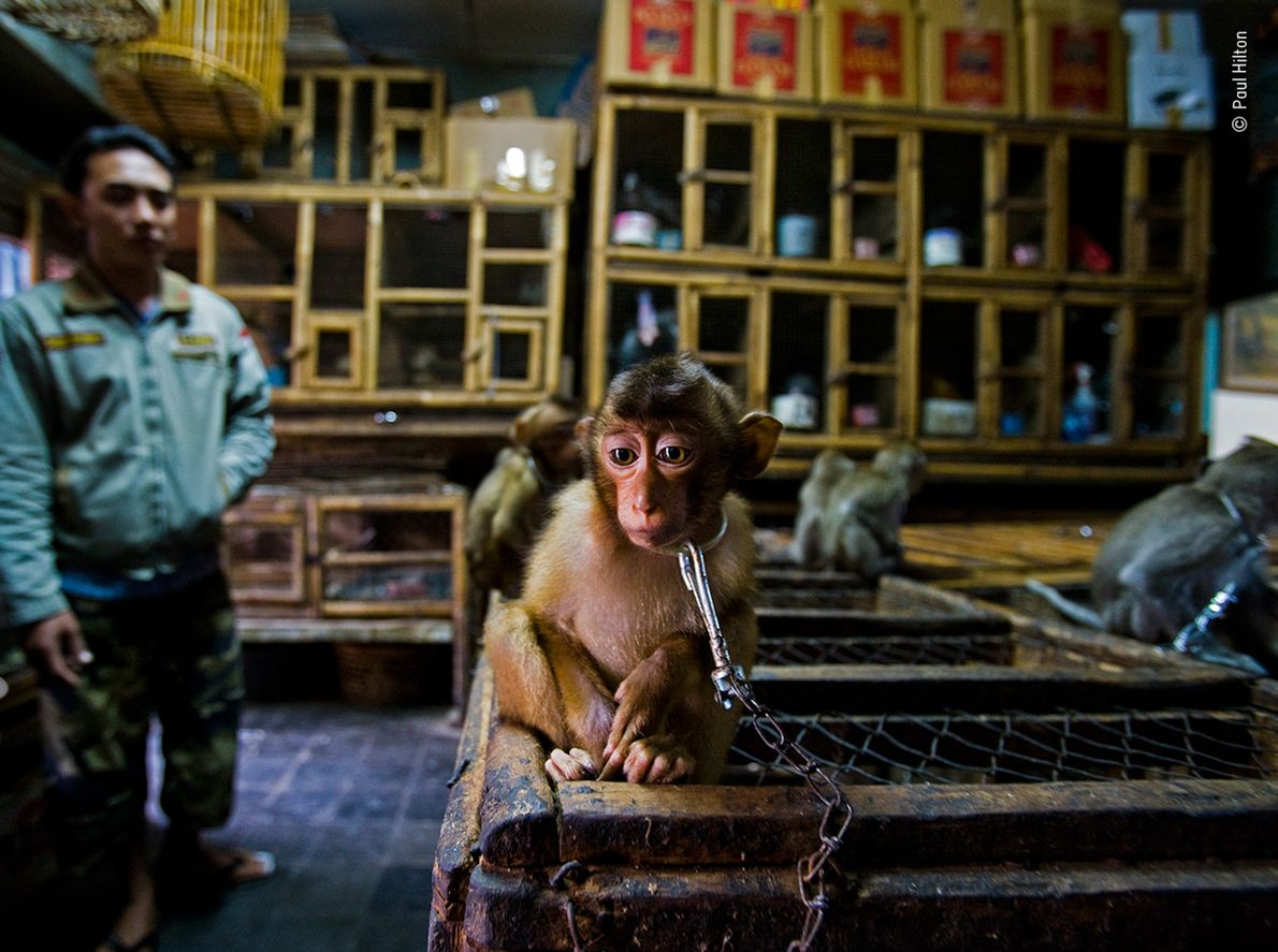 """Paul Hilton won the """"Wildlife Photojournalism: Story"""" award for his work documenting the global wildlife trade. ..."""