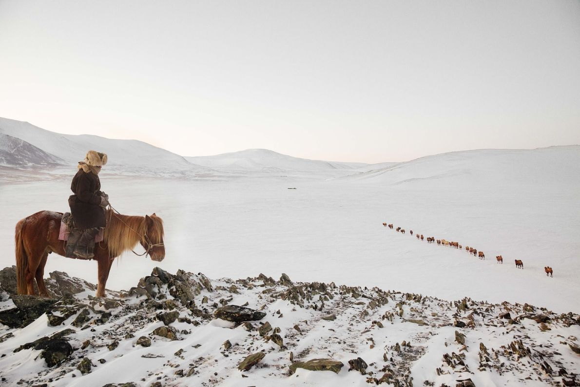 """A horseman checks on the Bactrian camels during their 150 kilometre migration in western Mongolia. """"They ..."""