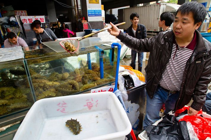 In China, sea cucumbers, seen here at Guangzhou's biggest seafood market, are a luxury food, thought ...