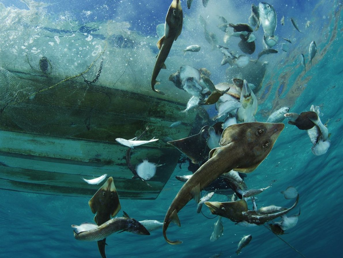 Bycatch, Gulf of California