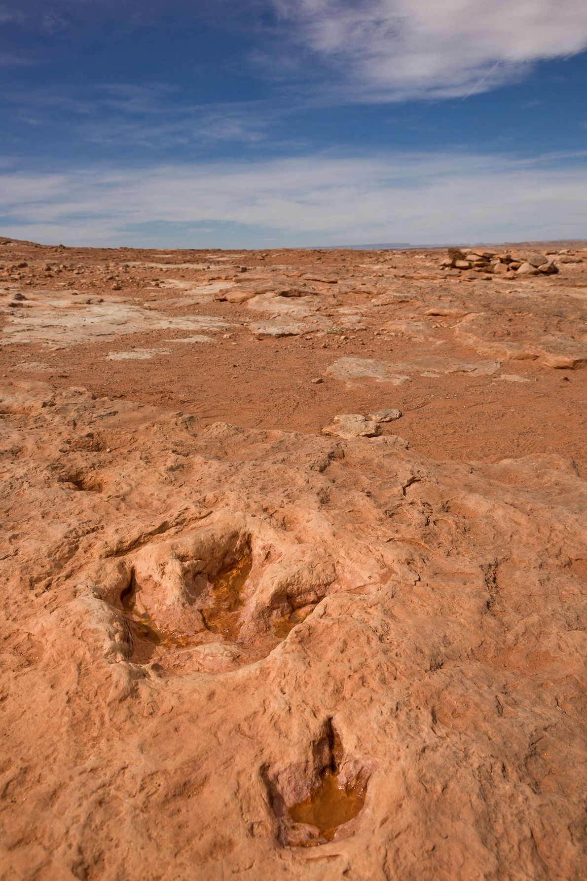 Two sets of footprints at the Moenkopi Dinosaur Tracks in Arizona were likely left by a ...