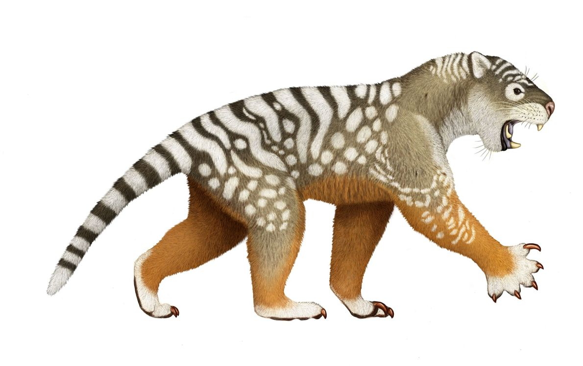 """""""Marsupial Lion Study"""" Australia's largest ever pouched predator, the marsupial lion, lived until about 40,000 years ago, ..."""