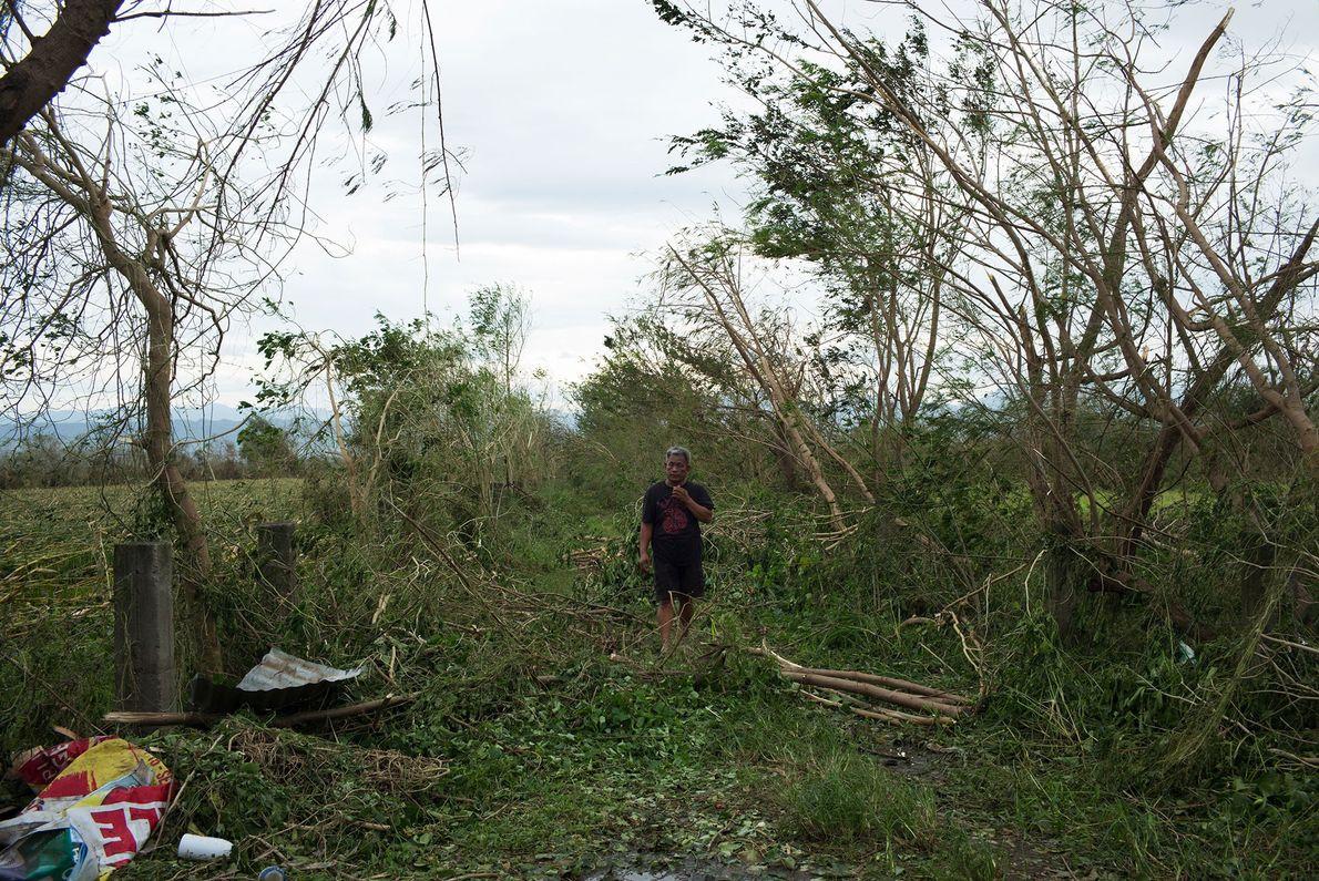 A man walks through a damaged corn field in Tuguegarao, Cagayan province, the Philippines. Mangkhut struck ...