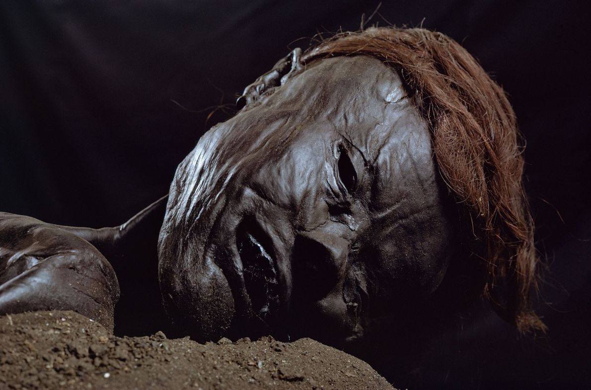 The Grauballe Man is a natural mummy formed by centuries of submersion in a peat bog. ...