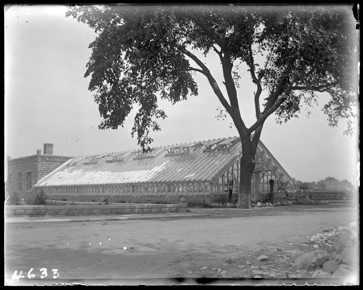 A tree provides shade over the reformatory's greenhouse.