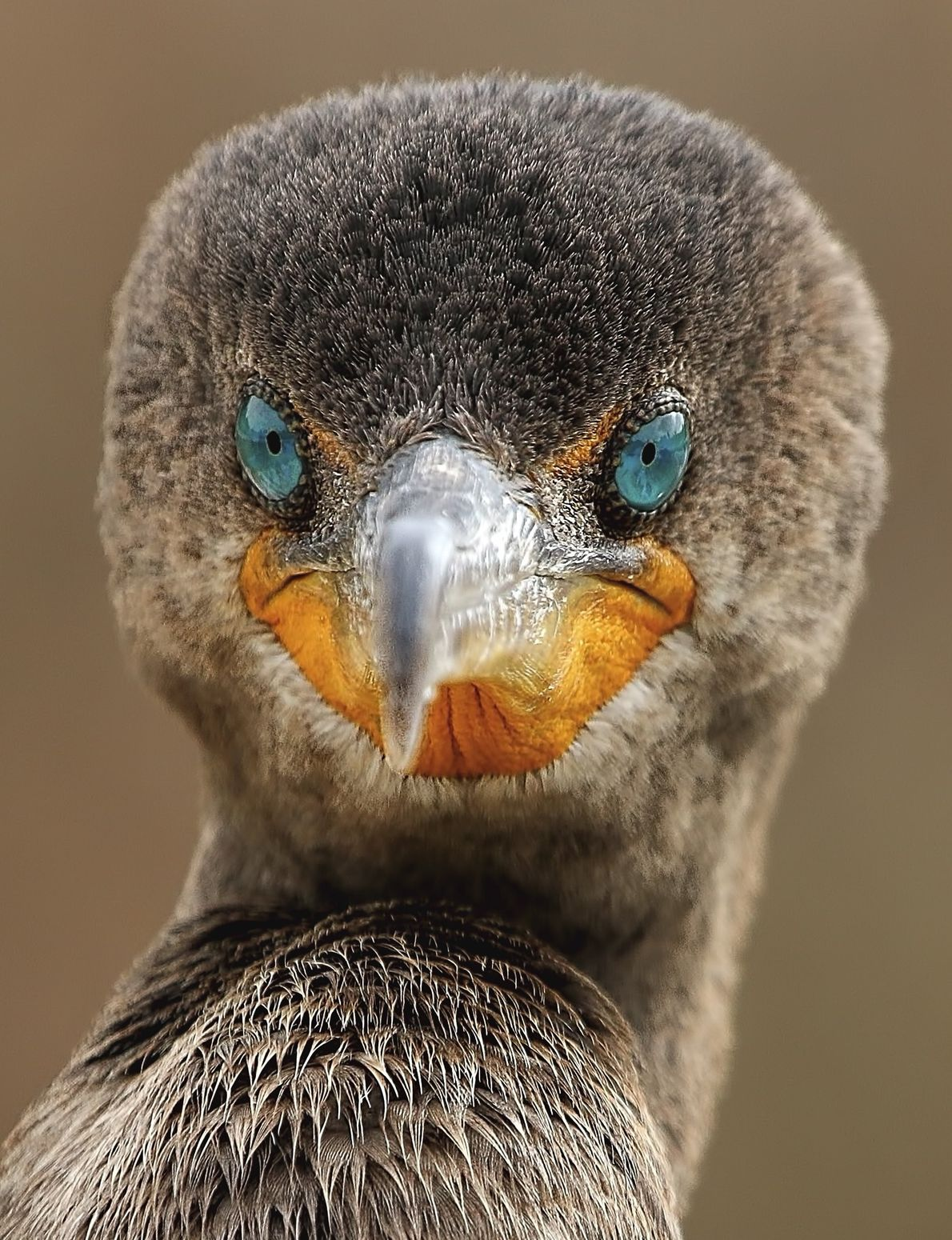 Your Shot photographer Sandy Scott made this close-up of a cormorant showing its mesmerising blue eyes.