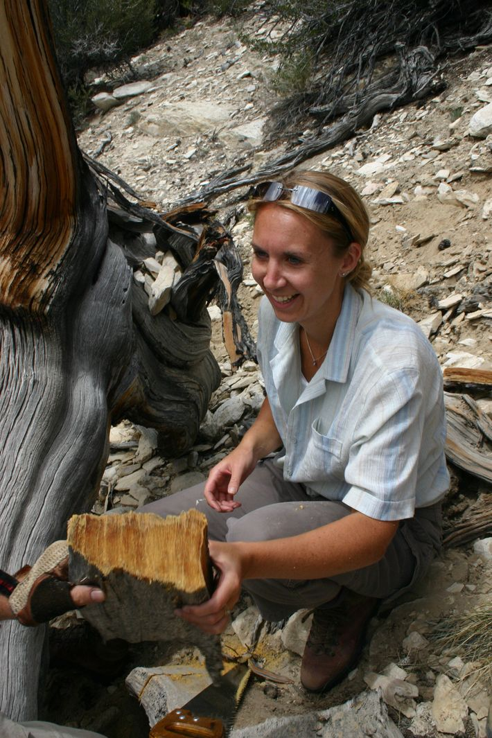 Dr Mary Gagen on location. Analysing tree rings provides centuries of climate change data.
