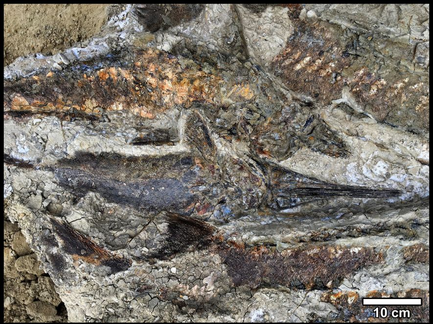 The Tanis deposits contain a well-preserved mass of inter-tangled fish that retain their three-dimensional forms.
