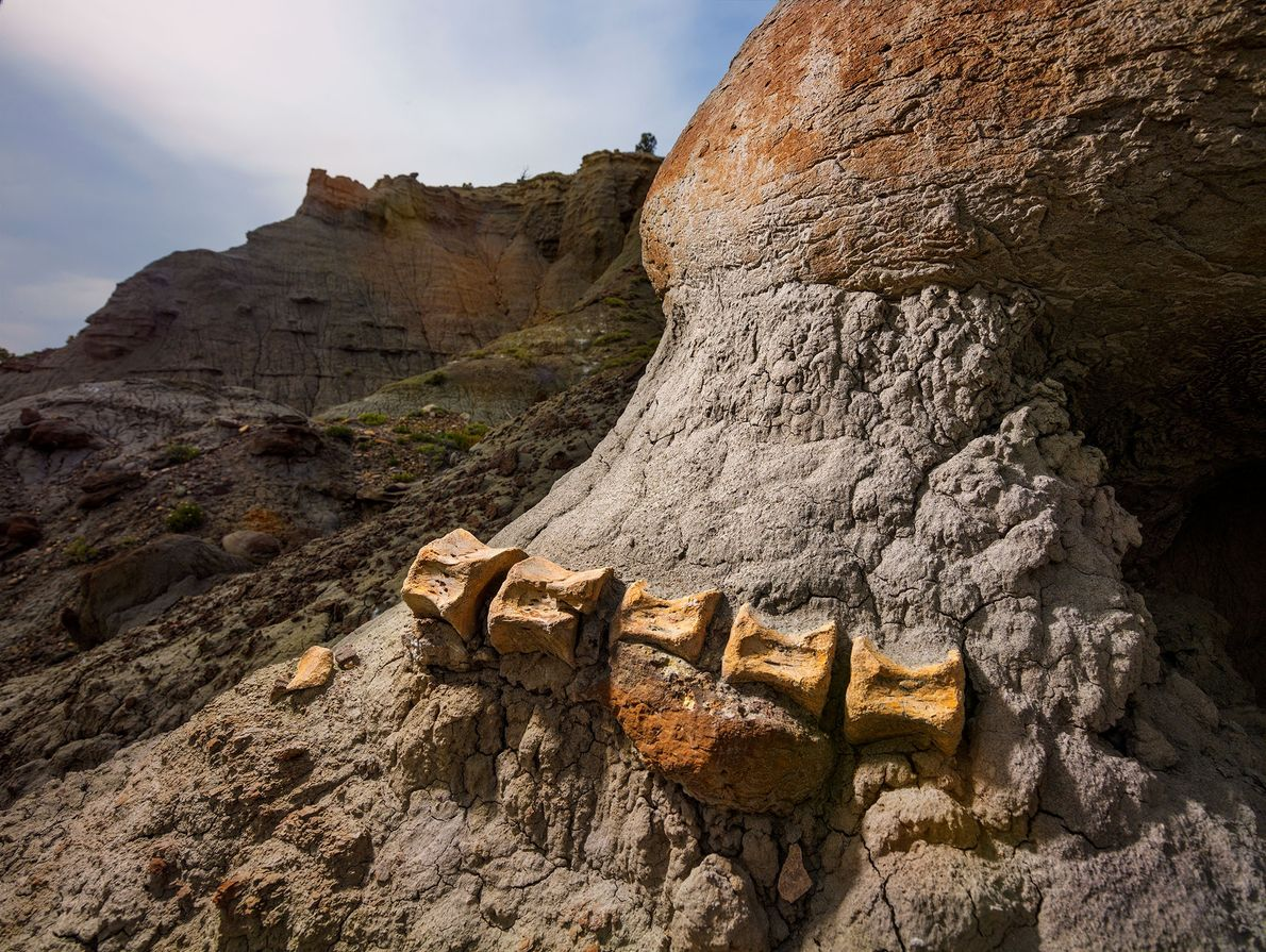 As winds and rain pound surface layers of sediment, they slowly expose any dinosaur fossils encased ...
