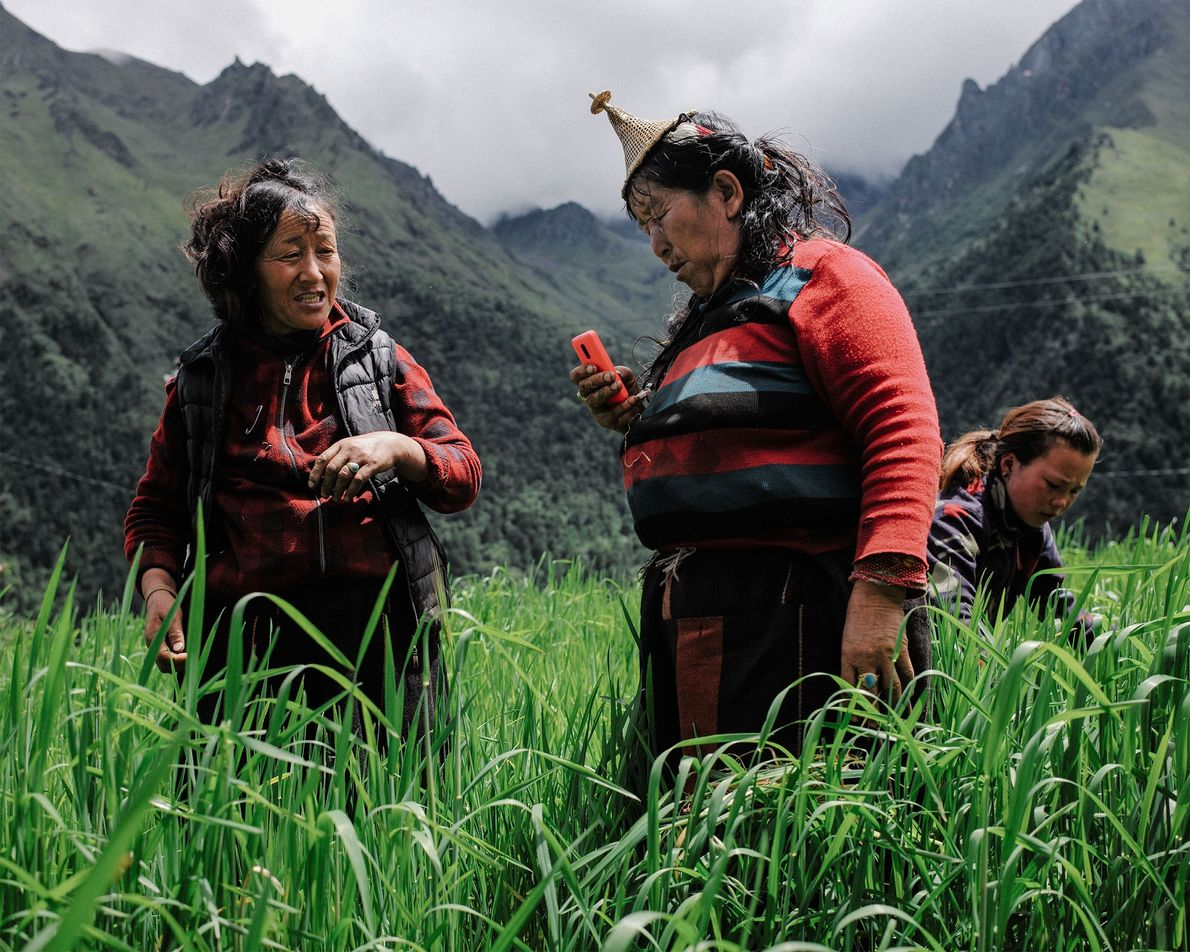 Two farmers pause their work at a rice field in Laya to make a phone call. ...