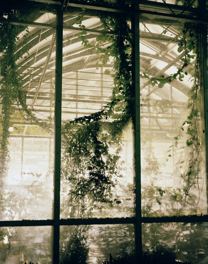 The Millennium Seed Bank, which is part of England's Royal Botanic Gardens, Kew, has a greenhouse ...