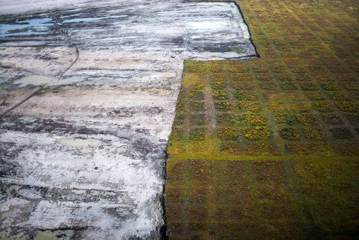 A swath of Boreal forest is stripped away to reveal the bitumen-laced ground at the Fort ...