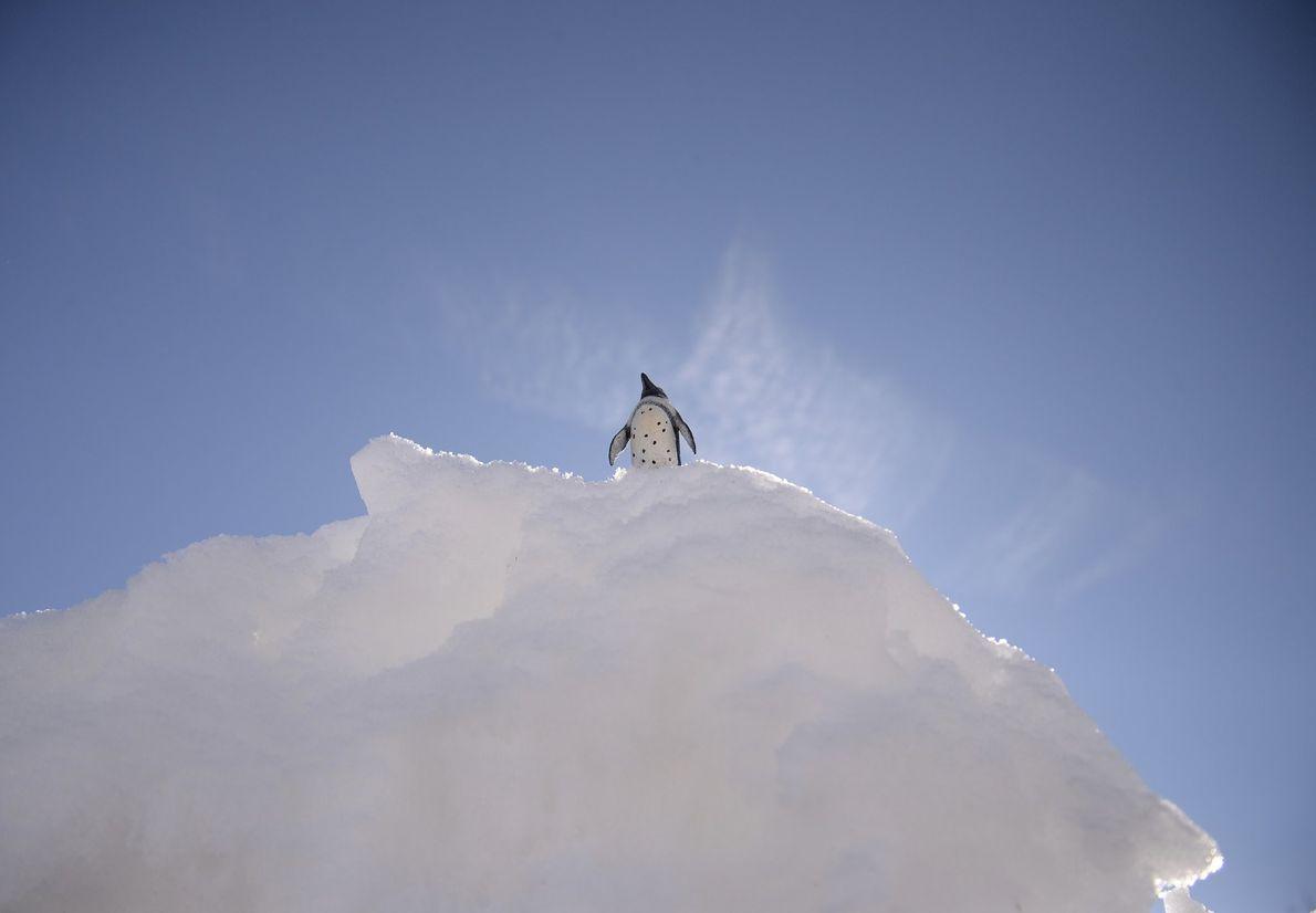 Your Shot photographer Linda Handley created this scene with a miniature penguin in Ashton, Idaho.