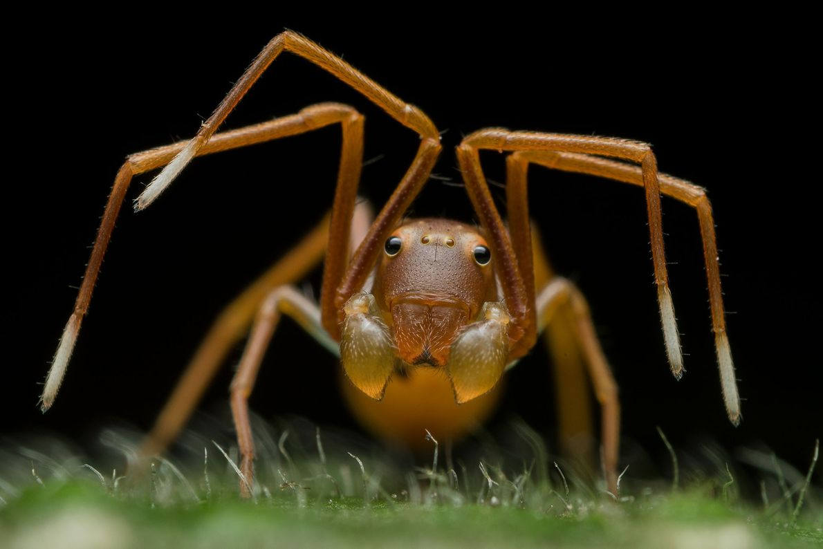 This photograph of an ant-mimicking crab spider won Indian photographer Ripan Biswas the top award in ...