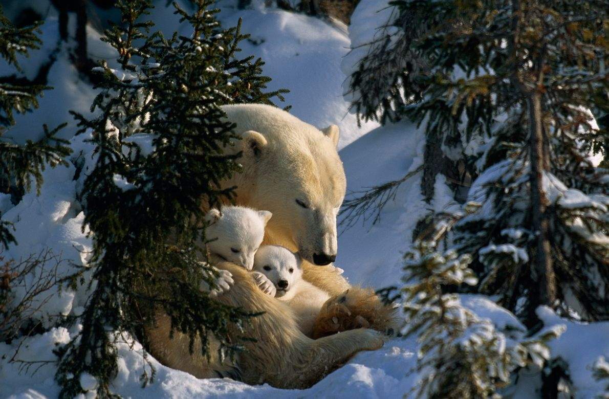Slumber in the Snow