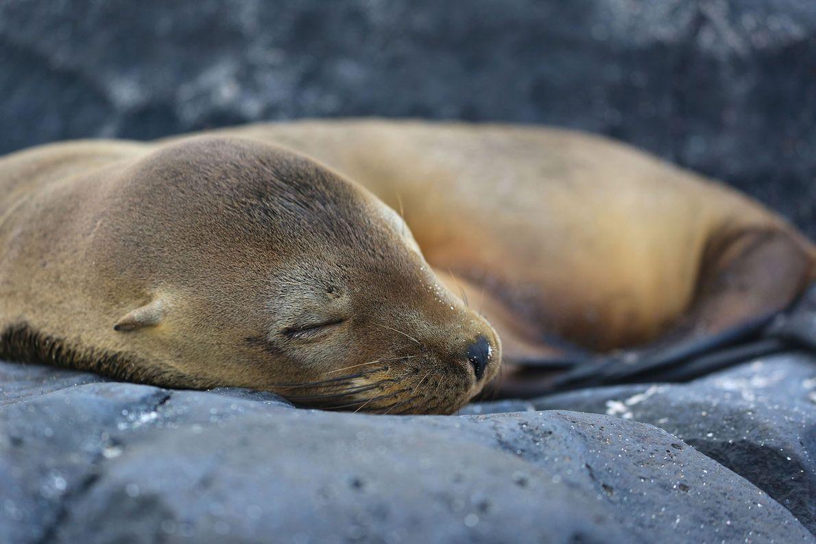 """Just a lovely sleeping seal,"" writes Your Shot photographer Vladimir Snegov."