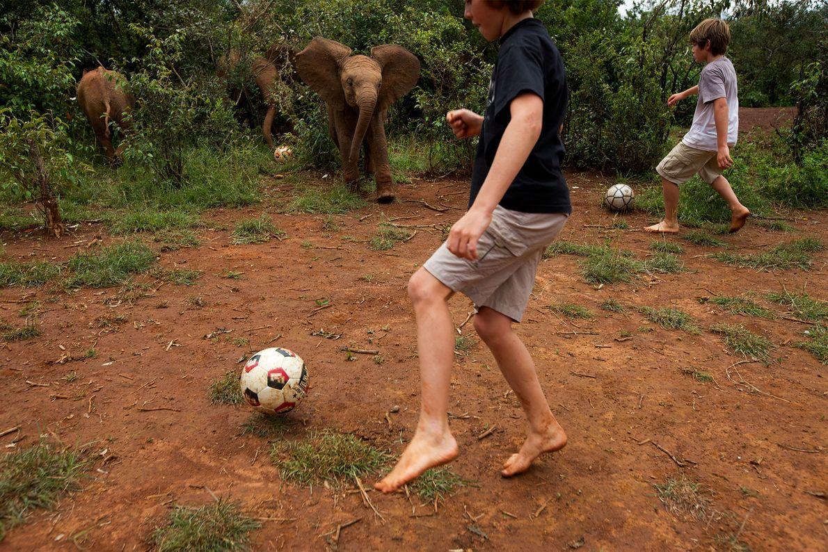 Boys play football with orphan elephant calves in Kenya's Nairobi National Park in 2010.
