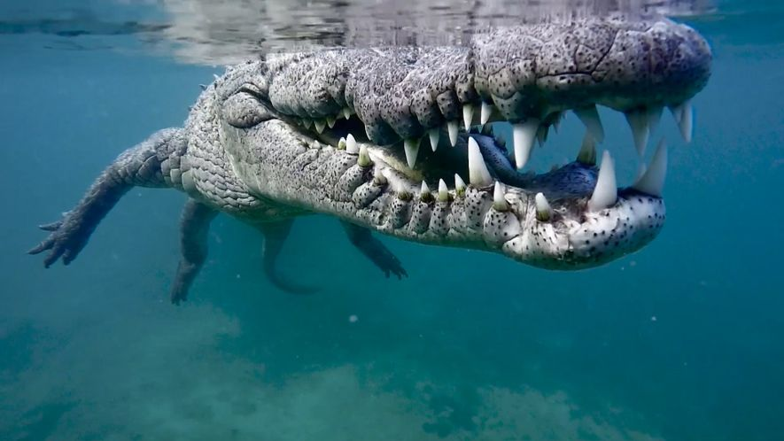 Behind the Scenes of a Close Crocodile Encounter